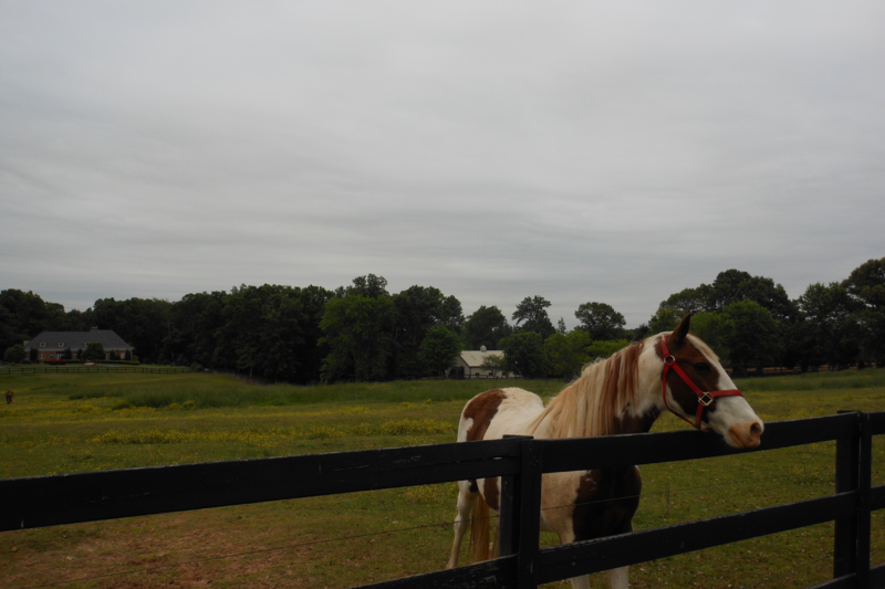 French Country Estate And Horse Farm Near The Blue